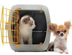 Domestic pet relocation - Hyderabad - Packers and Movers