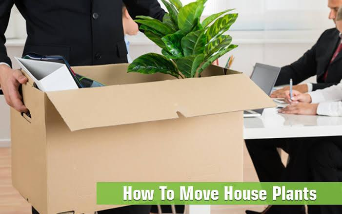 How to Move Plants - Hyderabad Packers and Movers