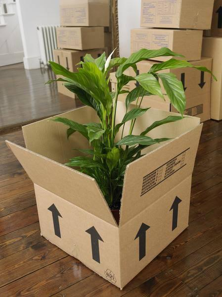 Plants relocation - Hyderabad - Packers and Movers